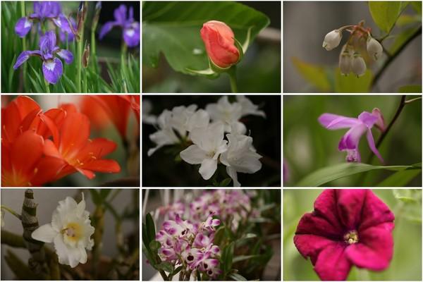 4月29日の庭.jpg